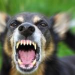 Victim of a Dog Bite?